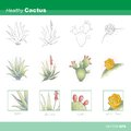 Zdravý kaktus