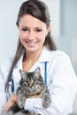 Healthy cat female veterinarian holding a after an examination Royalty Free Stock Photos