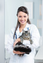 Healthy cat portrait of a smiling female vet holding a feline Stock Images