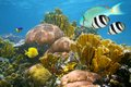 Healthy colorful coral reef undersea scene with and tropical fish caribbean sea Royalty Free Stock Photo