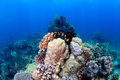 Healthy coral pinnacle hard corals and crinoids on a tropical reef Royalty Free Stock Photography