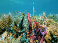 A healthy coral reef with abundant fish Royalty Free Stock Photo