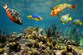 Healthy coral reef in colombia with colorful fish just under the water surface caribbean sea Stock Images