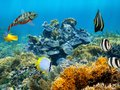 Healthy coral reef with colorful tropical fish caribbean sea Royalty Free Stock Image