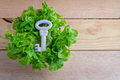 Healthy food concept jpg lettuce and white key on wooden floor Royalty Free Stock Photo