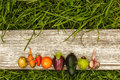 Healthy foods. autumn harvest. raw food for vegetarians Royalty Free Stock Photo