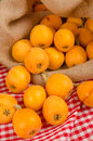 Healthy freshly picked loquats Royalty Free Stock Photo