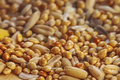 Healthy grains macro shot of assortred mix particular focus in a foreground blurred background Stock Image