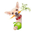 Healthy hungry dog Royalty Free Stock Photo