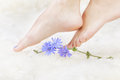 Healthy legs and flower body part shot of beautiful young woman s on white fur with blue chicory Royalty Free Stock Photos