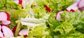 Healthy salad background mix of bio vegetables and Royalty Free Stock Photo
