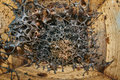 Healthy Stingless Bees Hive