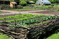 Healthy vegetables in wood fencing enclosure, garrison gardens,King's Garden,Fort Ticonderoga,New York,2015 Royalty Free Stock Photo