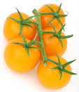Healthy yellow cherry tomato with green stalk Royalty Free Stock Image