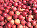 Heap of apples Royalty Free Stock Photo