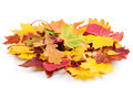 Heap of autumnal leaves Stock Photo