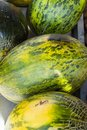 Heap of Big Ripe Organic Green and Yellow Striped Melons at Farmers Market. Vibrant Colors. Summer Harvest. Vitamins Superfoods Royalty Free Stock Photo