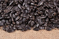 Heap of black sunflower seeds on a sacking background Royalty Free Stock Photos