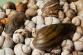 Heap of different shells river Royalty Free Stock Photos
