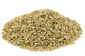 heap of dried sunflower seeds Royalty Free Stock Photo