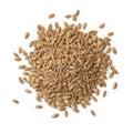 Heap of Einkorn wheat seeds Royalty Free Stock Photo