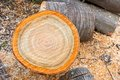 Heap of firewood cutting logs Royalty Free Stock Photo