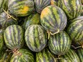 Heap of fresh stripped watermelons for sale at supermarket