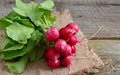 Heap of a garden radish Royalty Free Stock Photo