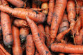 Heap gathered carrots mud Royalty Free Stock Photos