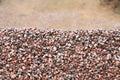 Heap of gravel Stock Photography
