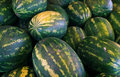 Heap of green water melone outdoor Stock Images