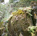 A heap of moss the stone was patched with moss。 Stock Images