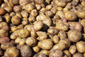 Heap of new raw potatoes Stock Photo