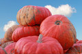 Heap of pumpkins against blue sky Royalty Free Stock Photo