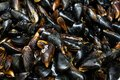 Close-up heap of raw fresh mussels on counter at local fish market. Heap of Nutritious shellfish mollusk at seafood store Royalty Free Stock Photo