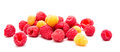 Heap of red and yellow raspberry Royalty Free Stock Photo