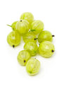Heap of ripe, fresh harvested green gooseberry fruit