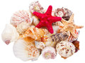 Heap of seashells Royalty Free Stock Images