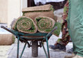 Heap of sod rolls for installing new lawn and two worker beside wheelbarrow with rolls of sod Royalty Free Stock Photo