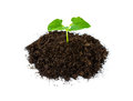 Heap soil with a green plant sprout isolated on white background Royalty Free Stock Image