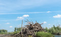 Heap of tree branches trunks and roots at a large pile in a countryside in springtime Royalty Free Stock Images