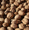 Heap of walnuts Stock Photography