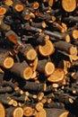 Heaped firewood Stock Photo