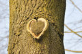 Heart a as a symbol of a tree Royalty Free Stock Photography