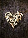 Heart From Beans