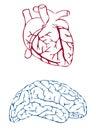 Y cerebro