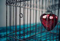 Heart in cage red trapped inside an old rusty bird Royalty Free Stock Images