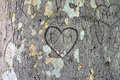Heart carved in the bark texture of bar with kalemegdan belgrade Stock Photo