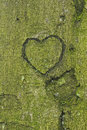 Heart carved in tree trunk a into a Royalty Free Stock Photos