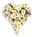 Heart of daisies Stock Image